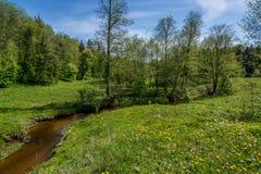Río en un bosque Imagenes de archivo
