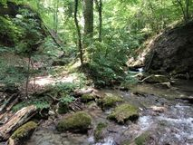 Río en un bosque denso Fotografía de archivo libre de regalías