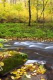 Río entre árboles Fotos de archivo