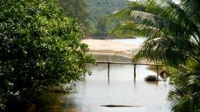 Río entre el bosque tropical cerca de la costa Río entre los árboles exóticos cerca de la playa de la arena del mar en día solead almacen de metraje de vídeo