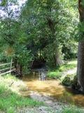 Río entre los árboles Fotos de archivo
