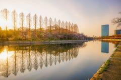 Río hermoso con la reflexión del árbol y de la torre Fotos de archivo libres de regalías