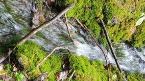 Río hermoso de la cascada de la corriente de la cala de la montaña que fluye en bosque verde del verano almacen de video