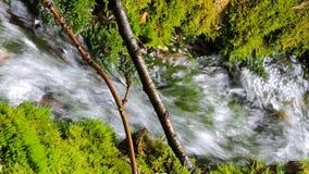 Río hermoso de la cascada de la corriente de la cala de la montaña que fluye en bosque verde del verano almacen de metraje de vídeo