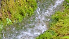 Río hermoso de la cascada de la corriente de la cala de la montaña que fluye en bosque verde del verano metrajes