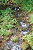 Río hermoso de la montaña que corre abajo de una cama rocosa en un bosque de Imágenes de archivo libres de regalías