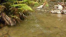 Río hermoso y natural de Kawatuna almacen de video