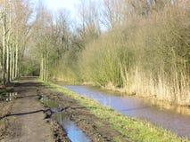 Río holandés en bosque imagen de archivo