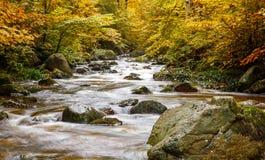 Río Ilse en el Harz Imágenes de archivo libres de regalías
