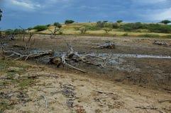 Río inundado Foto de archivo libre de regalías
