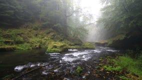 Río Kamenice en el otoño, Suiza bohemia almacen de video