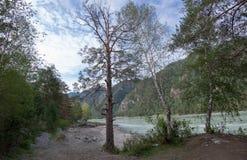 Río Katun, Siberia, Altai de la montaña Fotos de archivo
