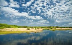 Río la Florida de Myakka Imágenes de archivo libres de regalías