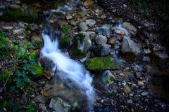 Río largo y verde Moss Stone In Forest de la exposición Foto de archivo