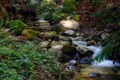 Río largo y verde Moss Stone In Forest de la exposición Imagen de archivo