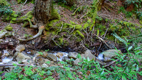 Río largo y verde Moss Stone In Forest de la exposición Imágenes de archivo libres de regalías