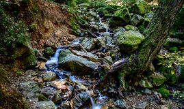 Río largo y verde Moss Stone In Forest de la exposición Foto de archivo libre de regalías