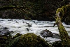 Río medio de la bifurcación en la curva del norte Washington Fotos de archivo
