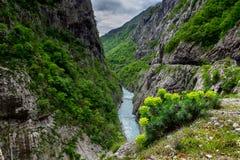 Río Moraca en las montañas de Montenegro Imagen de archivo libre de regalías