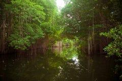 Río negro Imagenes de archivo