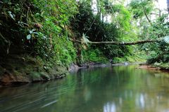 Río o corriente tropical negro con un vegation verde enorme y un árbol caido grande foto de archivo