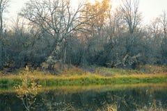 Río o lago en otoño temprano en el bosque foto de archivo libre de regalías