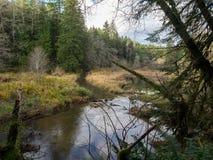 Río ocultado Imagen de archivo