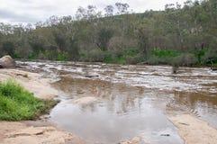Río pacífico del cisne imagenes de archivo