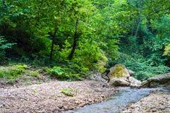 Río profundamente en bosque de la montaña Foto de archivo