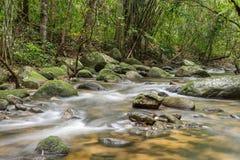 Río profundamente en selva tropical de la montaña imagenes de archivo