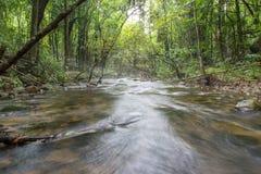 Río profundamente en selva tropical de la montaña foto de archivo libre de regalías