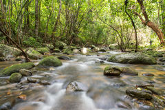Río profundamente en selva tropical de la montaña fotos de archivo libres de regalías