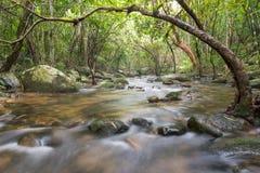 Río profundamente en selva tropical de la montaña Fotos de archivo