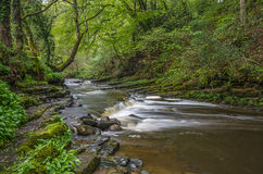 Río que acomete a través del arbolado antiguo Imágenes de archivo libres de regalías