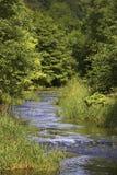 Río que atraviesa la ruta alineada árbol Imágenes de archivo libres de regalías