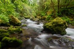 Río que atraviesa un bosque Imágenes de archivo libres de regalías