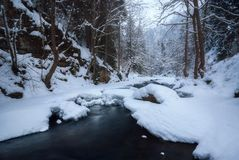 Río que atraviesa un bosque en invierno fotografía de archivo