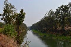 Río que atraviesa un Forrest Imagenes de archivo