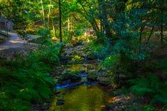 Río que fluye abajo a través de rocas en centro de un bosque verde Fotografía de archivo