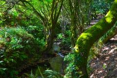 Río que fluye abajo a través de rocas en centro de un bosque verde Imagenes de archivo