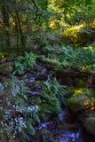 Río que fluye abajo a través de rocas en centro de un bosque verde Foto de archivo libre de regalías