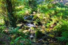 Río que fluye abajo a través de rocas en centro de un bosque verde Imágenes de archivo libres de regalías