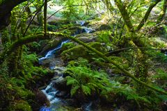 Río que fluye abajo a través de rocas en centro de un bosque verde Imagen de archivo libre de regalías