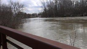 Río que fluye e hierbas móviles en naturaleza pacífica almacen de video