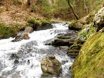Río que fluye en las montañas de Jeseniky Fotos de archivo libres de regalías