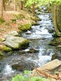 Río que fluye en las montañas de Jeseniky foto de archivo libre de regalías