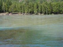 Río que fluye en los bancos herbosos metrajes
