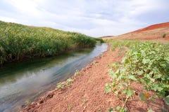 Río que fluye entre los matorrales de cañas Fotos de archivo
