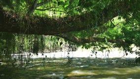 Río que fluye escénico almacen de metraje de vídeo