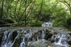 Río que fluye y fondo profundo verde del bosque Fotografía de archivo libre de regalías